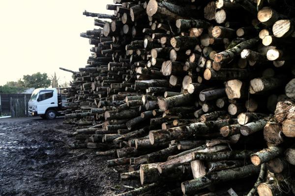 log-holder-company-firewood_2224_Enhancer-600x400